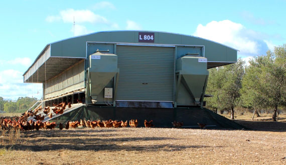 mobile shed with chickens